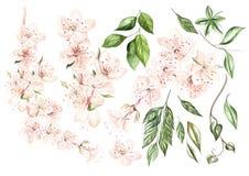 Mooie waterverf die met de lentebloemen en installaties wordt geplaatst royalty-vrije illustratie