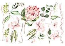 Mooie waterverf die met proteabloemen en hibiscus wordt geplaatst Tropische installaties en bladeren vector illustratie