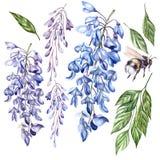 Mooie waterverf geplaatst witt bloemen van wisteria, bladeren en bij royalty-vrije illustratie