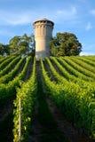 Mooie weelderige, groene wijngaard Stock Afbeeldingen