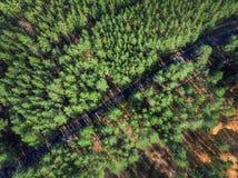 Mooie weg door altijdgroen pijnboombos op heldere zonnige dag Ecotoerisme en reisconcept Luchthommelmening stock foto's
