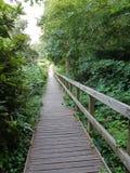 Mooie weg in een bos stock foto