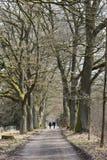 Mooie weg met oude bomen op een zonnige dag in Kassel, Duitsland stock foto