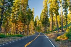 Mooie weg tussen het bos tijdens zonsondergang bij het Nationale Park Californië van Yosemite stock fotografie