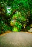Mooie weg of wegmanier in steeg met groene bomen en gras in de zomer zonnige openlucht zonder auto stock afbeelding