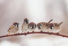 Mooie weinig Kerstmisvogels die op otcei in de tuin zitten stock foto