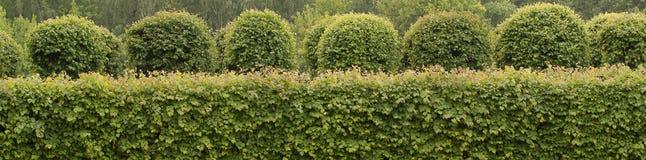 Mooie well-kept bomen en struiken in het park royalty-vrije stock afbeelding