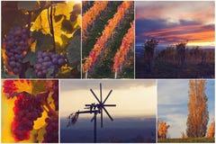 Mooie wijngaard Stock Foto