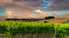 Mooie wijngaard bij zonsondergang Reis rond Frankrijk, Bordeaux stock video