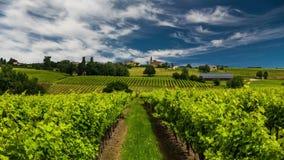 Mooie wijngaard bij zonsondergang Reis rond Frankrijk, Bordeaux stock videobeelden