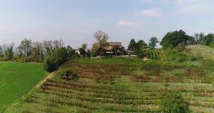 Mooie wijngaard bovenop een berg, op de achtergrond van een oude stad stock video