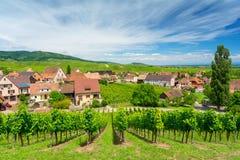 Mooie wijngaarden in Hunawihr-dorp, de Elzas, oostelijk Frankrijk stock afbeelding