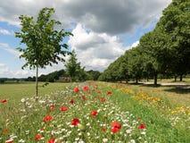 Mooie wilde bloemen door boom gevoerde weg in Chenies stock fotografie