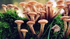 Mooie wilde paddestoelen in het bos royalty-vrije stock fotografie