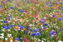 Mooie wildflowerweide met verschillende bloemen royalty-vrije stock afbeelding