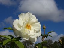 Mooie wit nam tegen blauwe hemel toe Royalty-vrije Stock Foto's