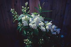 Mooie Witte Bloem Stock Afbeeldingen