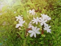 Mooie witte bloem in de aard royalty-vrije stock foto's