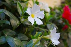 Mooie witte bloem op de stadsstraat stock afbeelding