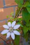 Mooie witte bloem op een achtergrond van groene bladeren royalty-vrije stock foto's