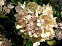 Mooie witte bloemen stock afbeeldingen