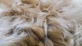 Mooie witte en bruine wol Stock Afbeelding
