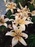 Mooie witte en gele bloem stock foto's