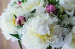 Mooie witte en roze pioenen abstracte achtergrond Stock Fotografie