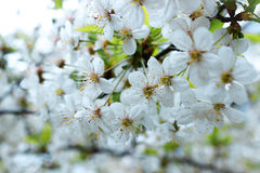 Mooie witte flovers Royalty-vrije Stock Foto's