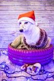 Mooie witte hond De foto van Kerstmis Gelukkig Nieuwjaar en Vrolijke Kerstmis Royalty-vrije Stock Afbeeldingen