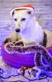 Mooie witte hond De foto van Kerstmis Gelukkig Nieuwjaar en Vrolijke Kerstmis Royalty-vrije Stock Fotografie