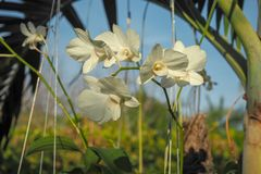 Mooie witte orchidee De achtergrond van de hemel royalty-vrije stock fotografie