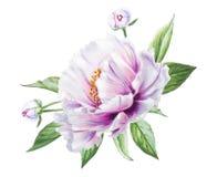 Mooie witte pioen Boeket van bloemen Bloemendruk Tellerstekening vector illustratie