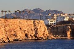 Mooie witte reigertribunes op gouden strand met palmen, selectieve nadruk Fantastisch verschrikkelijk dreamlike romantisch landsc royalty-vrije stock foto
