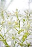 Mooie witte snijbloemen in vaas Royalty-vrije Stock Fotografie