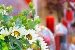Mooie witte valse bloem met onscherpe achtergrond Stock Afbeeldingen