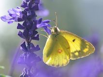 Mooie witte vlinder stock foto's