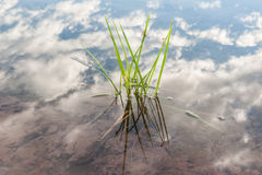 Mooie wolken en hemel Royalty-vrije Stock Foto
