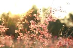 Mooie zachte lichte bloem Stock Fotografie