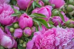 Mooie zachte roze pioenbloemen Royalty-vrije Stock Afbeelding