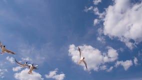 Mooie zeemeeuw in de blauwe hemel stock videobeelden
