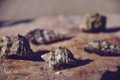 Mooie zeeschelpen op de steenvloer Achtergrond met verschillend Ondiepe Diepte van Gebied Gestemd beeld Stock Foto's