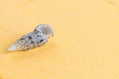Mooie zeeschelpen op een helder oranje zand stock afbeelding