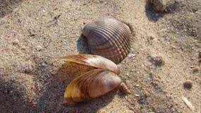 Mooie zeeschelpen op het zand stock afbeeldingen