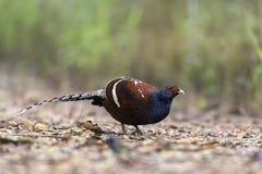 Mooie zeldzame vogeltribune op aardachtergrond Royalty-vrije Stock Foto