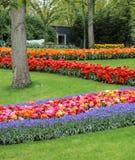 Mooie zigzag met gras bedekte tuin met vele gekleurde bloemen royalty-vrije stock fotografie