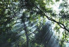 Mooie zonlichtstralen die door de bomen glanzen stock foto's