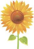 Mooie zonnebloem in vector Stock Afbeelding