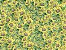 Mooie zonnebloemen royalty-vrije stock afbeeldingen