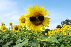 Mooie zonnebloemen met zonnebril Stock Foto